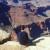 Foto del profilo di nicolamainardi